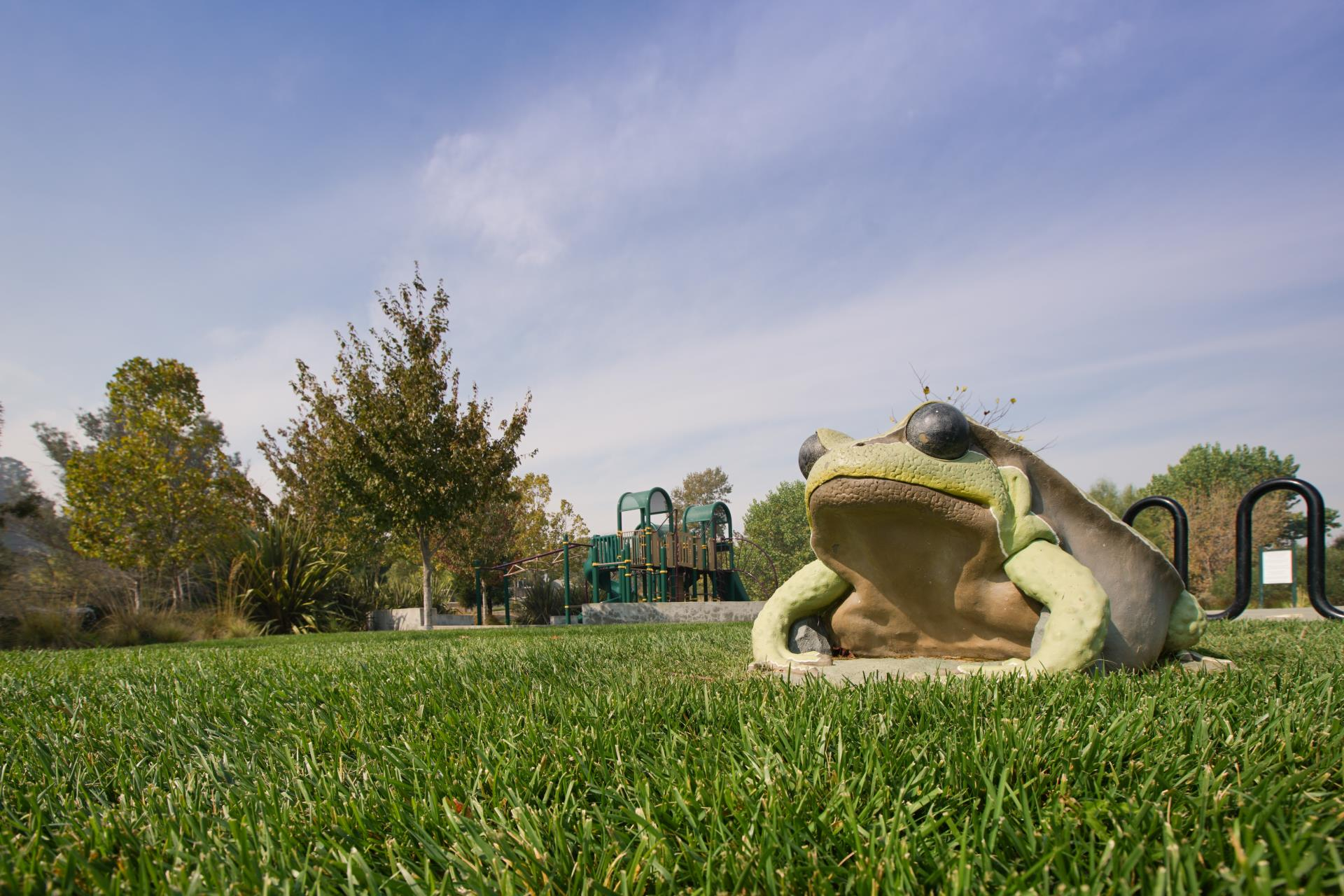 Frog Pad Park