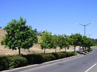 Trees on Refugio Valley Road